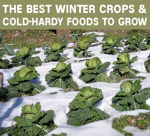 The Best Winter Crops And Cold-Hardy Foods To Grow