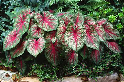 13 Plants That Give You Bang For Your Buck Page 2 Of 2