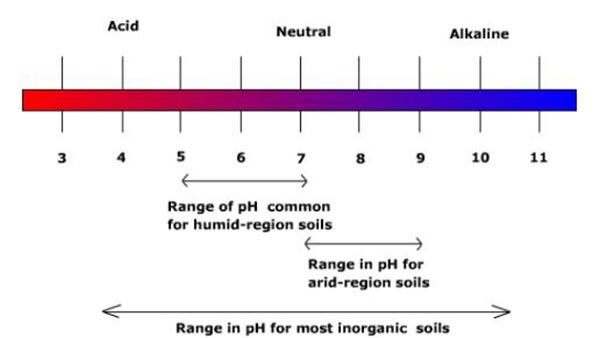how to change the ph of soil affects hydrangeas colours
